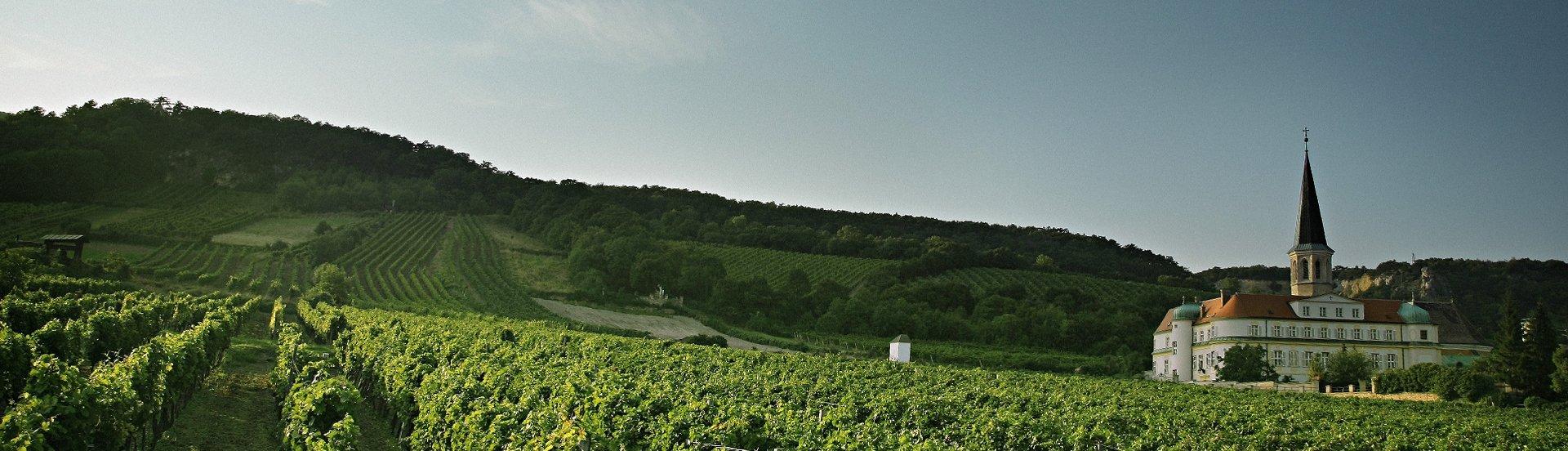 Weingarten Gumpoldskirchen