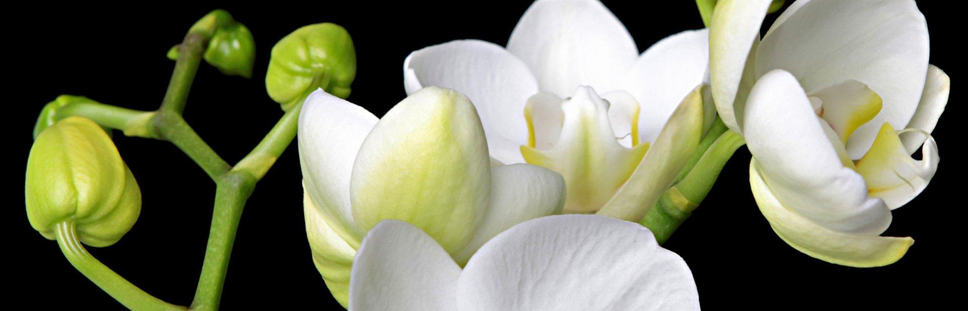 Orchideenausstellung 2019